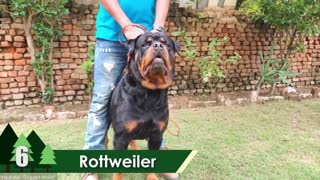 10 Most Powerful Dogs in the World.. Top Ten Dogs!