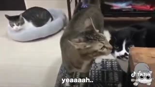 Watch these cats talking! So funny :)