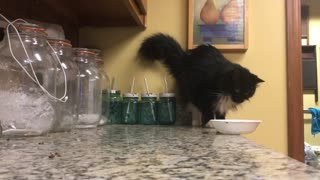 Bootsie the Cat Pushes Bowl off Bench