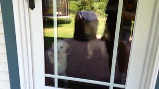Dogs can't wait to go outside