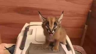 Little sweet kitty