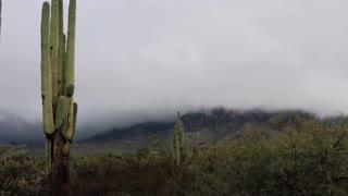 Arizona Desert Storms
