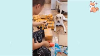 Cute and funny puppies, really smart