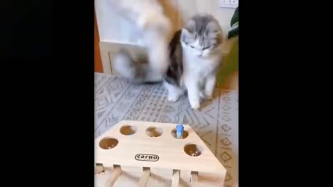 Funny Pets but try not to laugh.