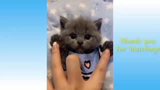 Watch These Funny Crazy Pet Videos