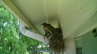 Baby Birds Just Two Days Later Part 3
