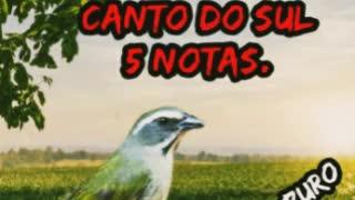 Best bird song beautiful song