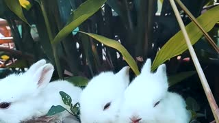 Funny Rabbits Resting On A Pot With A Plant