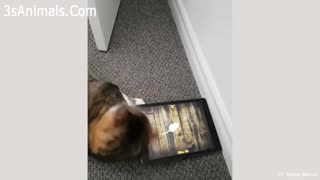 😆😹🤣 Funny CAT compilation