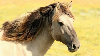 Horse hairs Moving