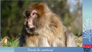 Monkey Monkey Monkey : Adorable Critters