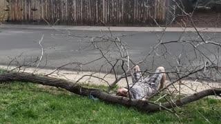 Tree Trim Fail