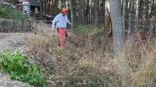 Timber Tree falling