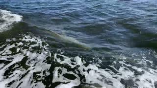 A Porpoise Driven Life
