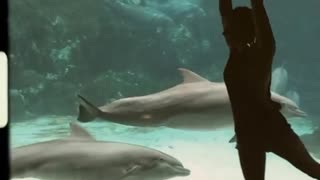 Girl Play With Dolphin