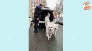 Cute puppies and their funny actions