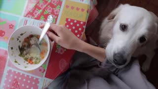 Dog _ while people eating