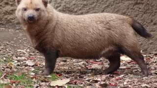 Some Interesting Facts About Bushdogs