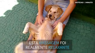 Cão dorme com a melhor massagem de todas!
