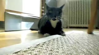Mad black cat attacks on me