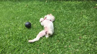 Shewawa Puppy Garden Ball Entertainment