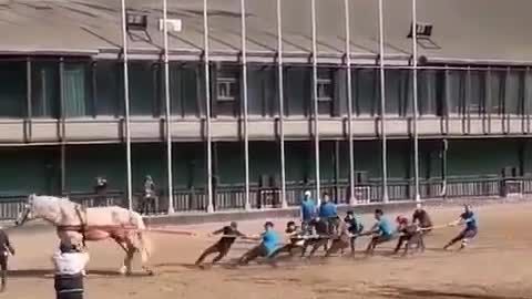 The tremendous power of the horse !