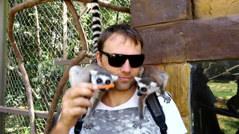Fany lemurs, saddenly jump