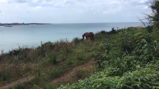 Jeju Island in Korea horse
