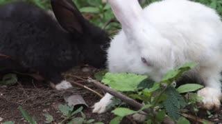 Rabbits eating green plant