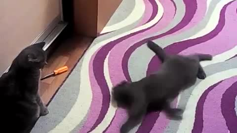 the cat sticks to the cat