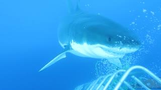 Scuba Diver has the Shark experience of a lifetime