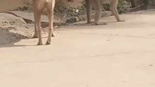 Dog and Monkey Super Funny Animal Video!