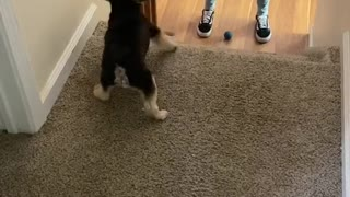 Pup Passes the Ball Back