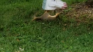 Squirrel Plays With Unicorn Shaped Feeder