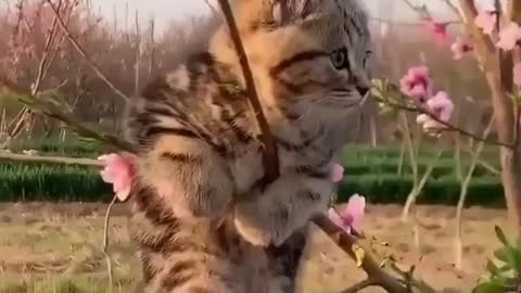 If you are a real cat lover