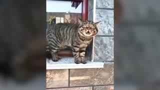 English speaking feline