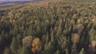 drone flight over the forest