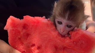 Cute Monkey is eating Food