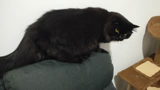 Black Cat: Cute Betty is Day Dreaming