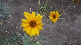 Autumn flowers, chamomile.