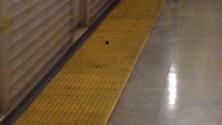 Small mouse runs with moving train in subway station