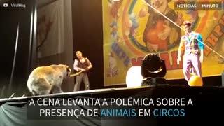 Urso ataca treinador em apresentação de circo