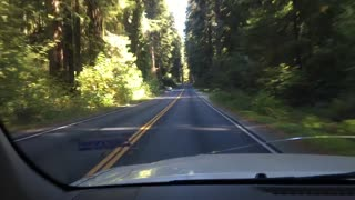 Peaceful drive through the Northern California Redwoods