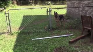Animals Getting Shocked With Weird Sound Effects