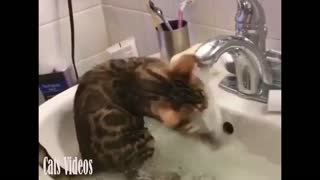 Cat play water on the aquarium in a very amazing way
