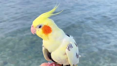 Parrot exploring Hawaii