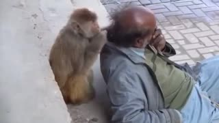 Funny clips of animals with rights