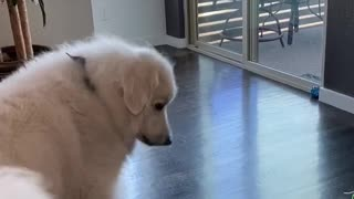 Doggo Doesn't Realize Its Own Size