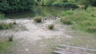 Canadian birds in England