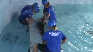 Rescued Rough-Toothed Dolphin Gets A Second Chance At Life.